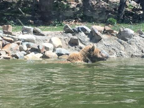 andorra bear