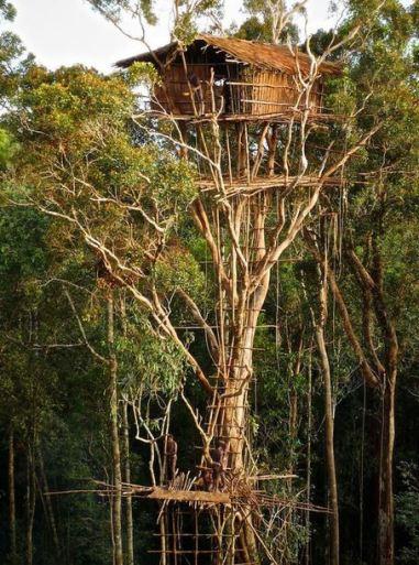 Treehouse Korowai