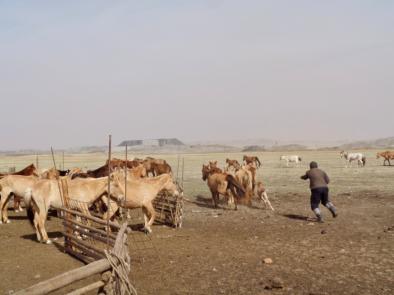 Mining Mongolia